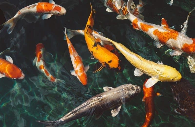 Les poissons à Marseille qu'il faut découvrir