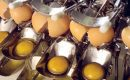 Généralités et importance des ovoproduits