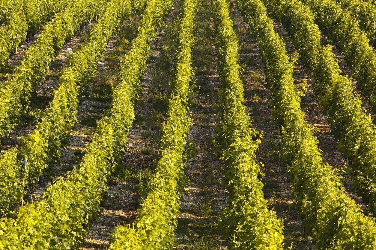 vin bourgueil val de loire